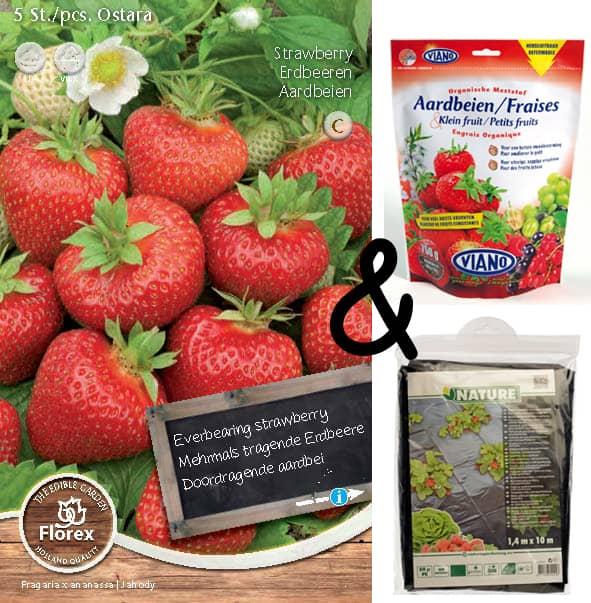 Beste kweekset aardbeien