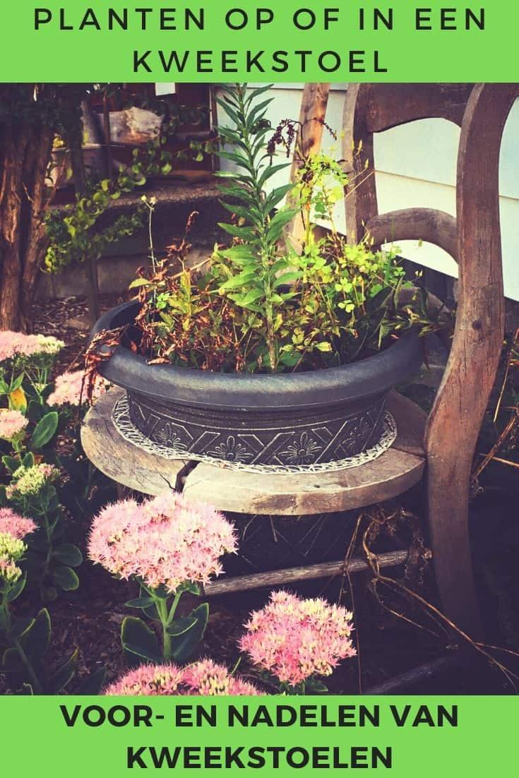 Stoel in de tuin met planten erop