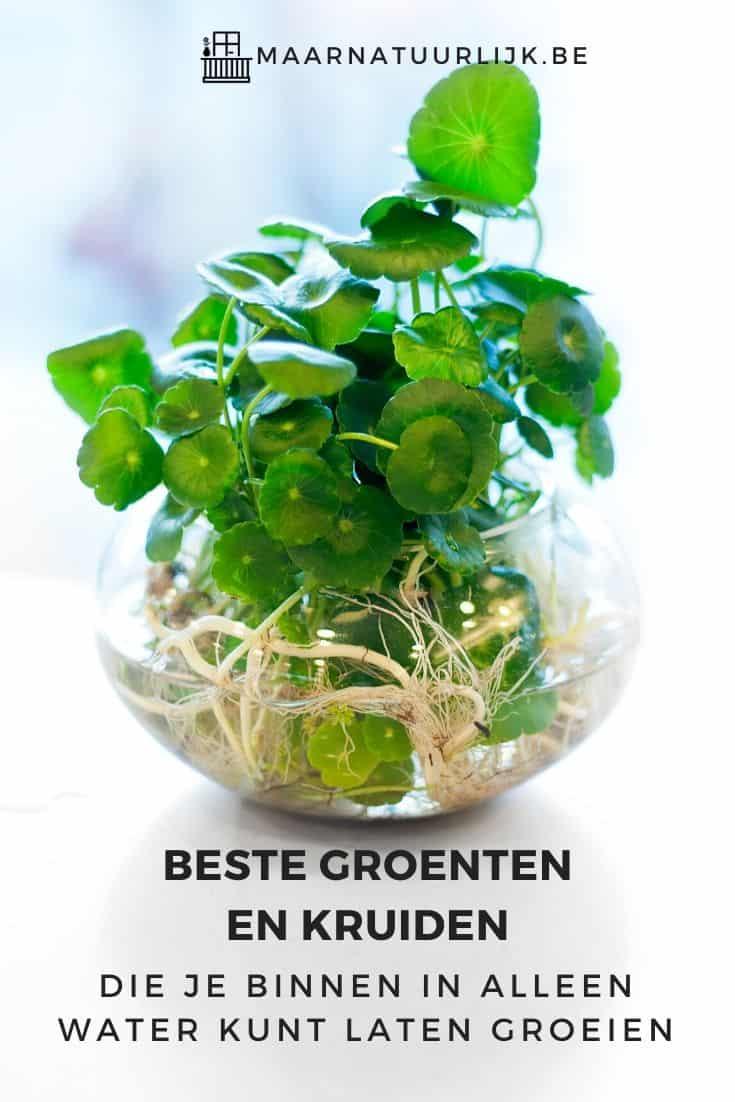 Planten die in een pot met alleen water groeien