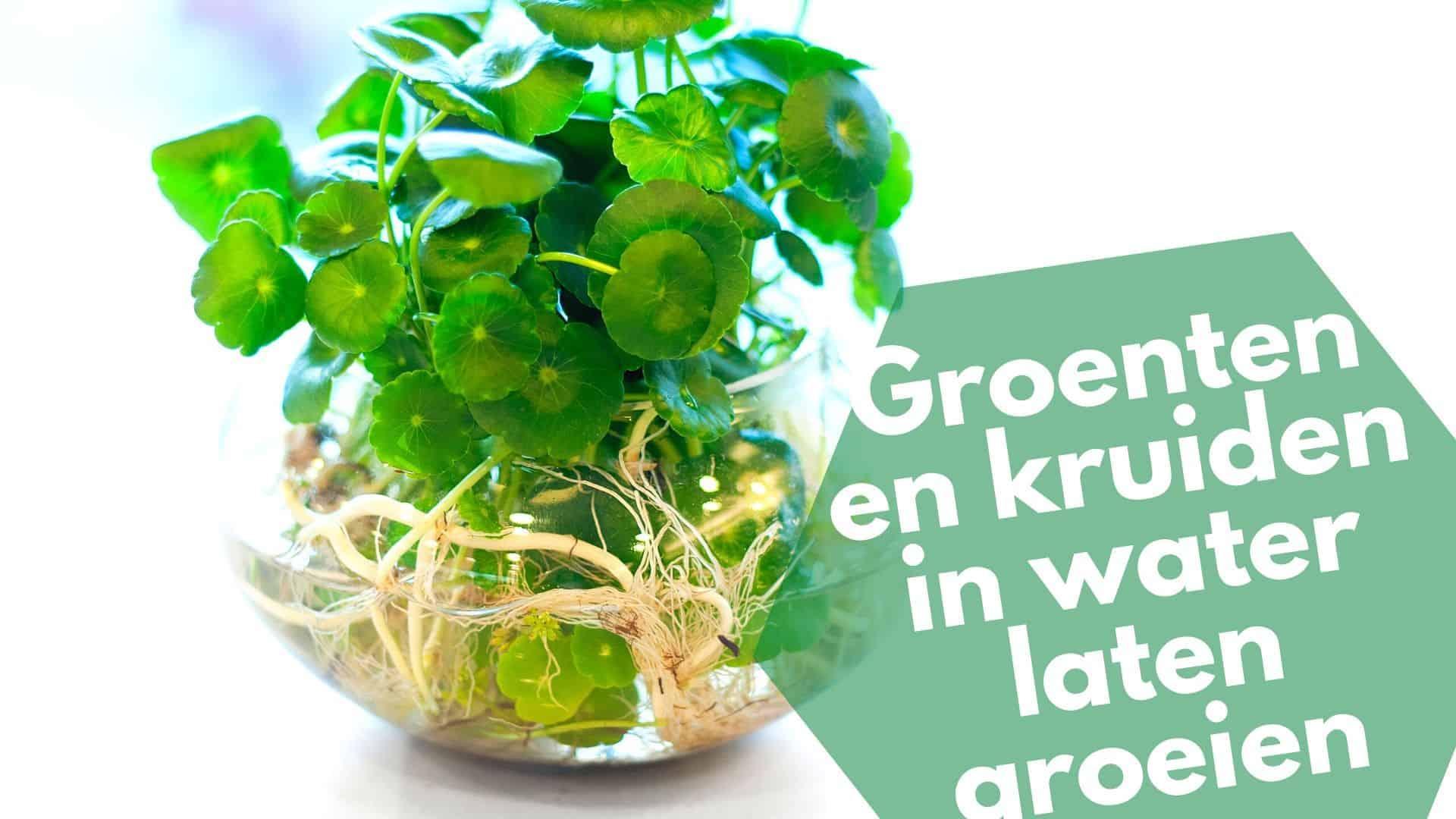 Beste kruiden en groenten die je binnen in water kunt laten groeien
