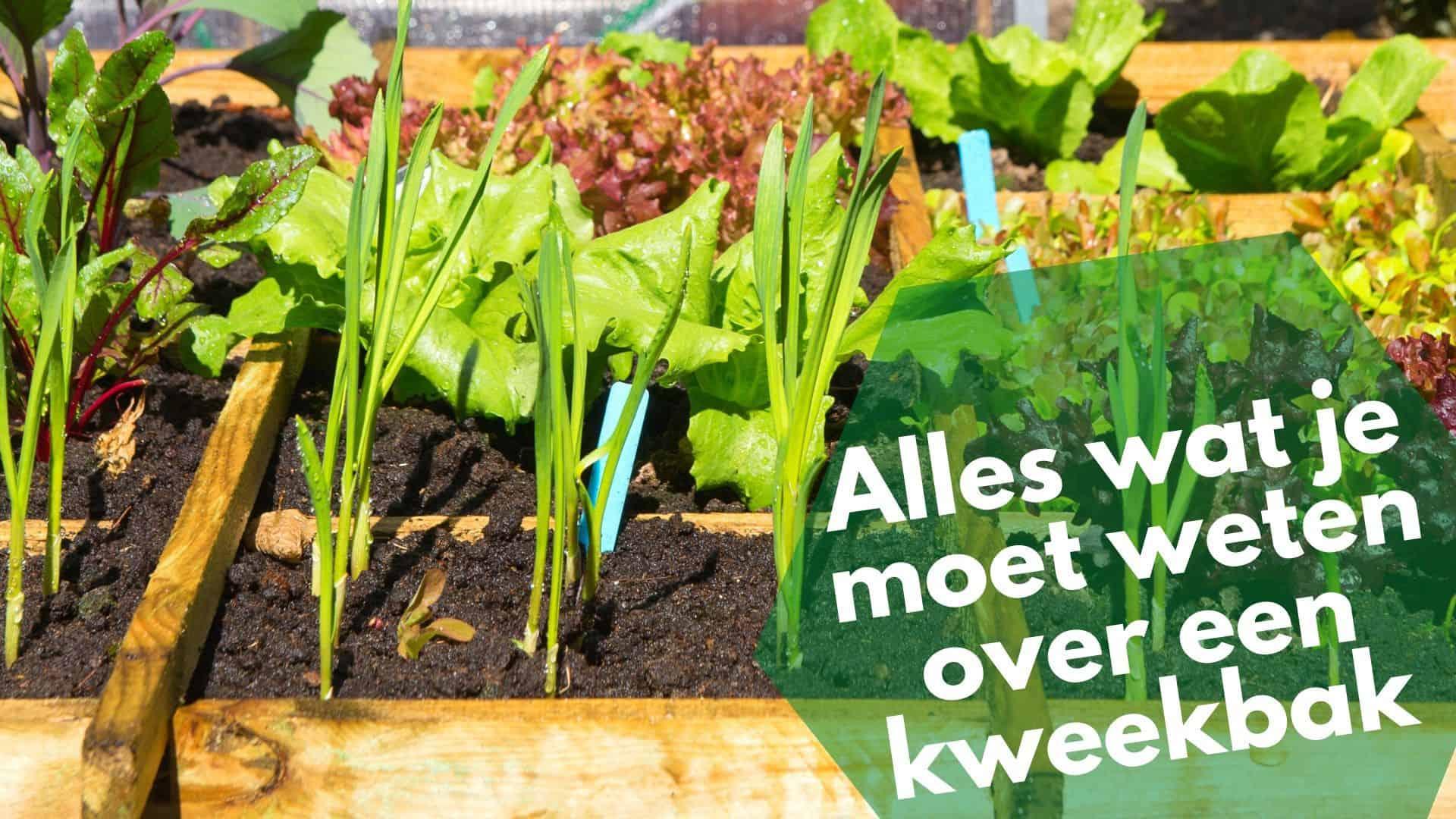 Beste kweekbakken beoordeeld & kweektips: wat ga jij kweken?