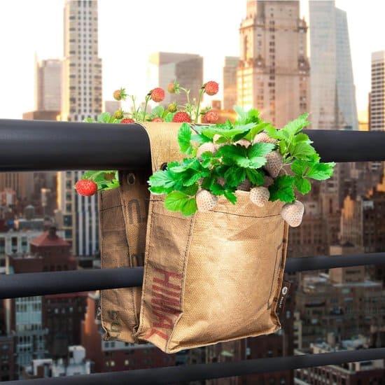 Beste kweektassen: Baza balkontuin rode en witte Aardbeien kweken