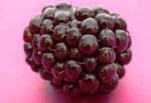 Zoetigheid die goed voor je is in fruit