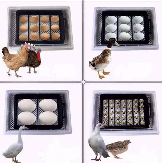 Beste broedmachine met uitkomstlade- Selim Incubator met verschillende gevogelte eieren